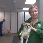 31 Dogs Rescued from Korean Meat Farm Find Shelter in Rockville